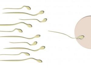 Sperma. Foto: Thommy Weiss / pixelio.de